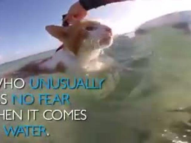 Cat at hawaii