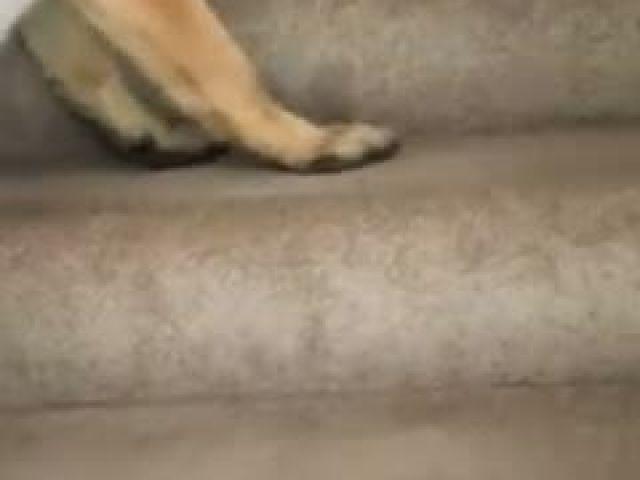 Dog Helps Cat