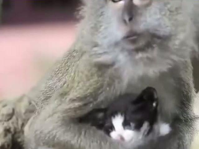Cat Best Friends