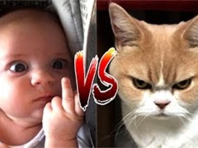 Funny Cat VS Baby in the world Compilation