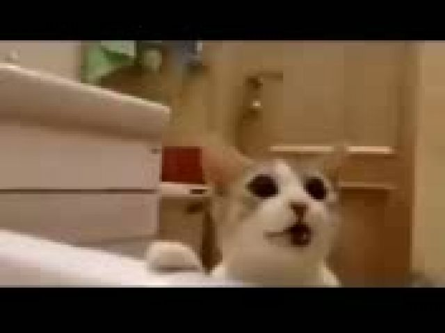 "Cutest Kitty: Cat Tries Saving His Human From ""Drowning"" In The Bathtub"