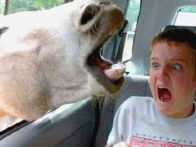 Funniest and most hilarious moments on Earth that can make anyone laugh