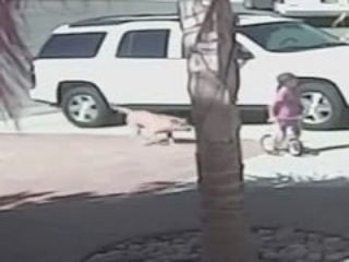 Hero Cat Saves Child From Dog Brutal Attack