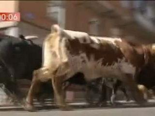 Quinto encierro de las Fiestas de San Sebastián de lo Reyes con toros de la ganadería de Victoriano del Río
