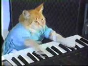 Charlie Schmidts The Keyboard Cat