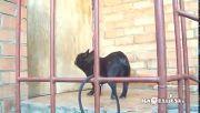 Dog Ask Open Door