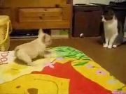 Puppy VS Cat Funny Dog Videos