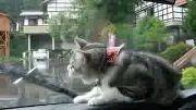 Kitty Loves Wiper!