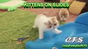 Kittens on Slides - Compilation