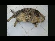 Ultimate Funny Cat Compilation 2013
