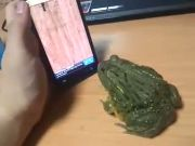 a frog tries to catch bugs on a touch screen