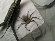 Spider Love Cocaine