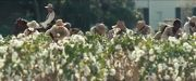 12 YEARS A SLAVE - Official Trailer