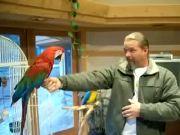 greenwing macaw gets shot