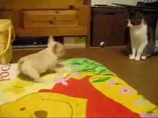 Puppy VS Cat Funny Dog Videos