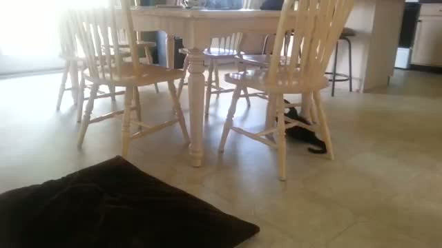 Silly Cat Plays On Chair Monkey Bars