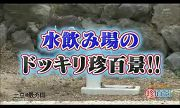 Funny Japanese - waterfountion prank