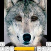 Wolf My Face Free! v1.0