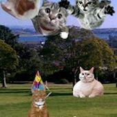 Add-a-Cat FREE - Photo Editor