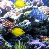 Aquarium Live Wallpaper for Android