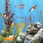 Freshwater Live Wallpaper
