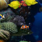Aquarium donation LW