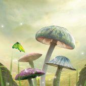 Magic Mushrooms LW