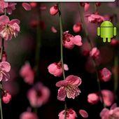 plum blossom live wallpaper