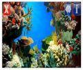 PicoBrothers The Aquarium v.1.00.s60v5