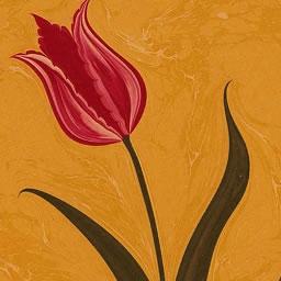 ইয়াসুর রাসুল সালাম আলাইকাম শ্রেষ্ঠ ইসলামি রঙ্গিন অ্যামের দ্বারা রঙ্গিন - কে - পাঠান