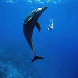 Wale singen
